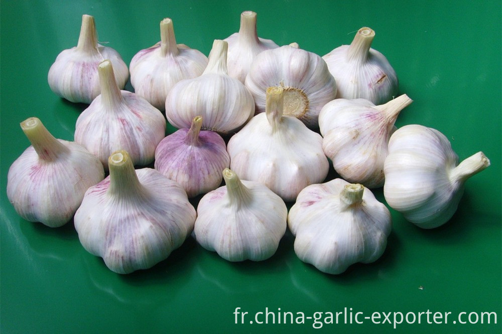 Supply Garlic New Season - cheap price