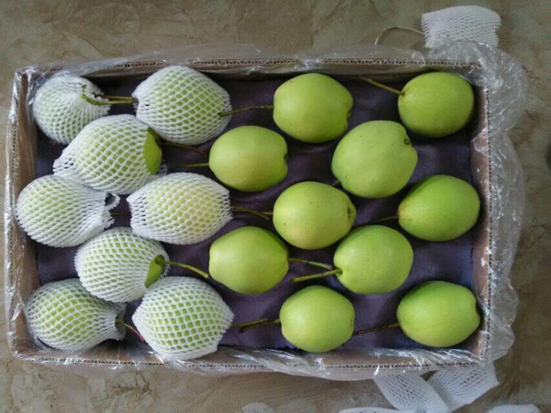 Chinese Fresh Green Shandong Pear Export Quality