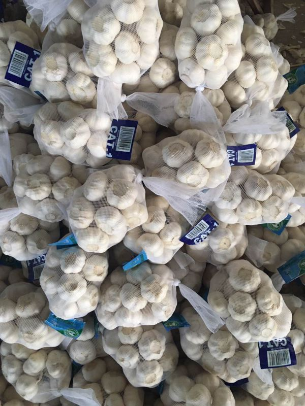 6.0-6.5cm Fresh Pure White Garlic
