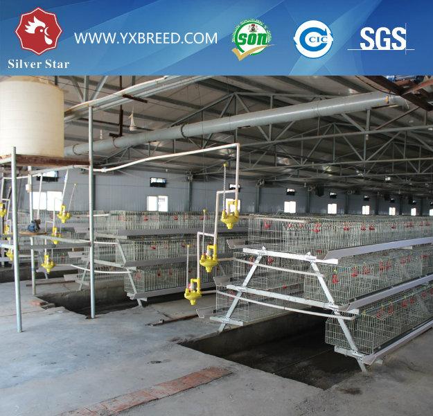 Bird Steel Chicken Cage Poultry Equipment