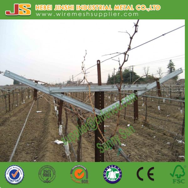 Galvanized Y Shaped Gable Vineyard Trellis Vertical Rail Line Post