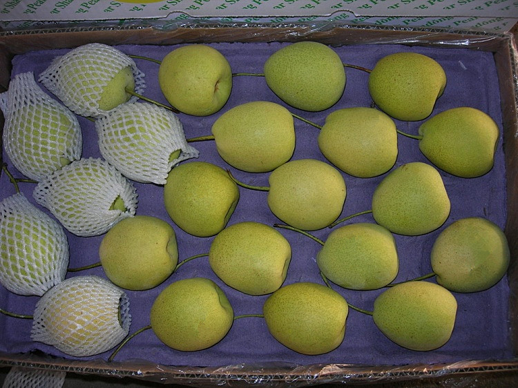 Selecting Quality Fresh Green Shandong Pear