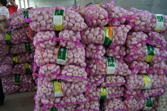 2016 New Crop Chinese Fresh Garlic