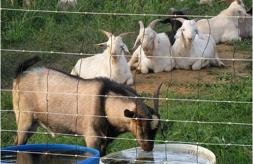 Farm Grassland Field Fence