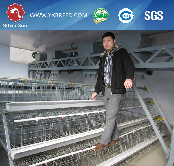 Silver Star Poultry Farm Layer Chicken Cage