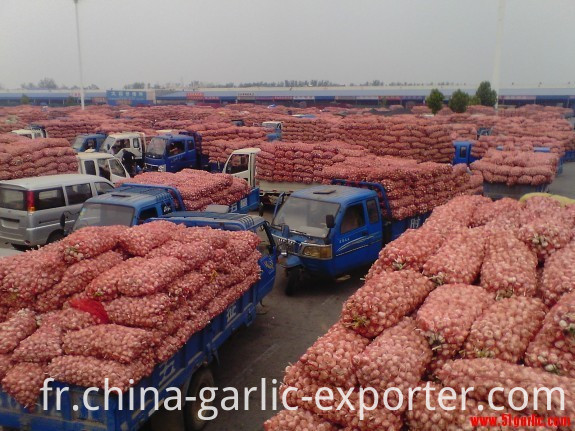 Jinxiang Victorious Fruit And Vegetable Trade Co.,Ltd Brief Introduction on Company Jinxiang Victorious Fruit and Vegetable Trade CO.,LTD., founded in 2010, is a world-wide fruits and vegetables supplier in China. After 7 years' growth,we have set up a perfect management system of production and exporting and become a leading company in manufacture and export of garlic, onion, fruits, vegetables and dehydrated garlic and so on. Our company is located at Jinxiang county which is well-known worldwide as the hometown of garlic; it is also very convenient to go to Qingdao port and Lianyungang port from the county. Our company is a comprehensive import and export agriculture processing enterprise. Different from other trading companies, we directly produce goods for exportation, so we are familiar with details of production and exportation, and we can make some adjustments quickly according to our customers' requests. Our company covers an area of 20,000 square meters and has six large-size thermostatic cold storage ware-houses with a capacity of 5000t for freezing and keeping products. We have built one-thermostatic processing warehouse to meet the quality requirement of raw materials for production and processing. Our company values the quality of products most, which is reflected in the way we do business. This is how we have developed good relations with lots of customers abroad and why our products are popular in Japan,Germany,Holland,Canada, Mauritius, Egypt, Algerians, Korea,UK,Africa and others 150 countries. Always acting legally and honestly, our company has been recognized by our customers both at home and abroad. We have a complementary fruits and vegetables portfolio that enables us to provide more choices for our customers, and drives lower costs, productivity enhancements and new capabilities. Fuelled by the desire for sustainable development and innovation, we are confident that our company will become stronger and stronger, and our products will become more and more popular across the world. We welcome friends all over the world to come to visit and cooperate with us!