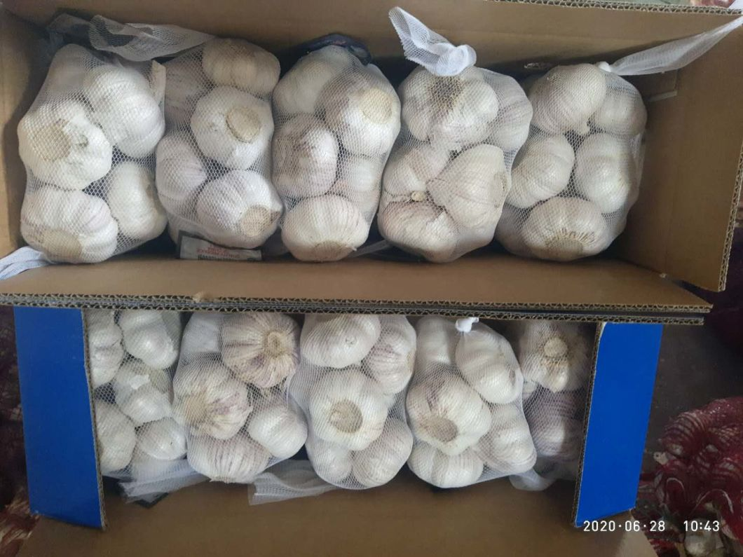 Alho fresco chinês de super qualidade para o mercado europeu