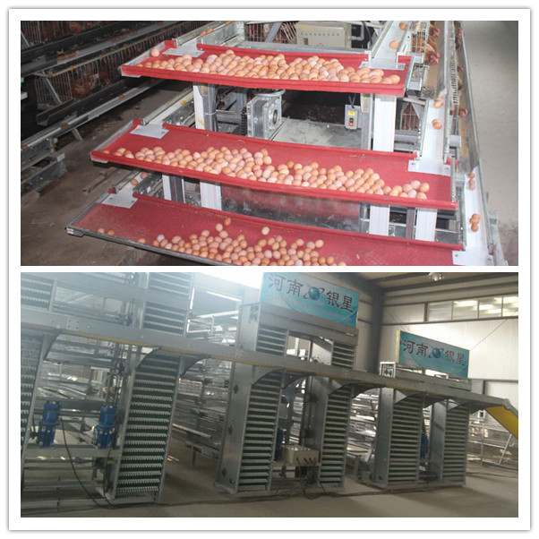 Silver Star Automatic Chicken Farm Poultry Cages