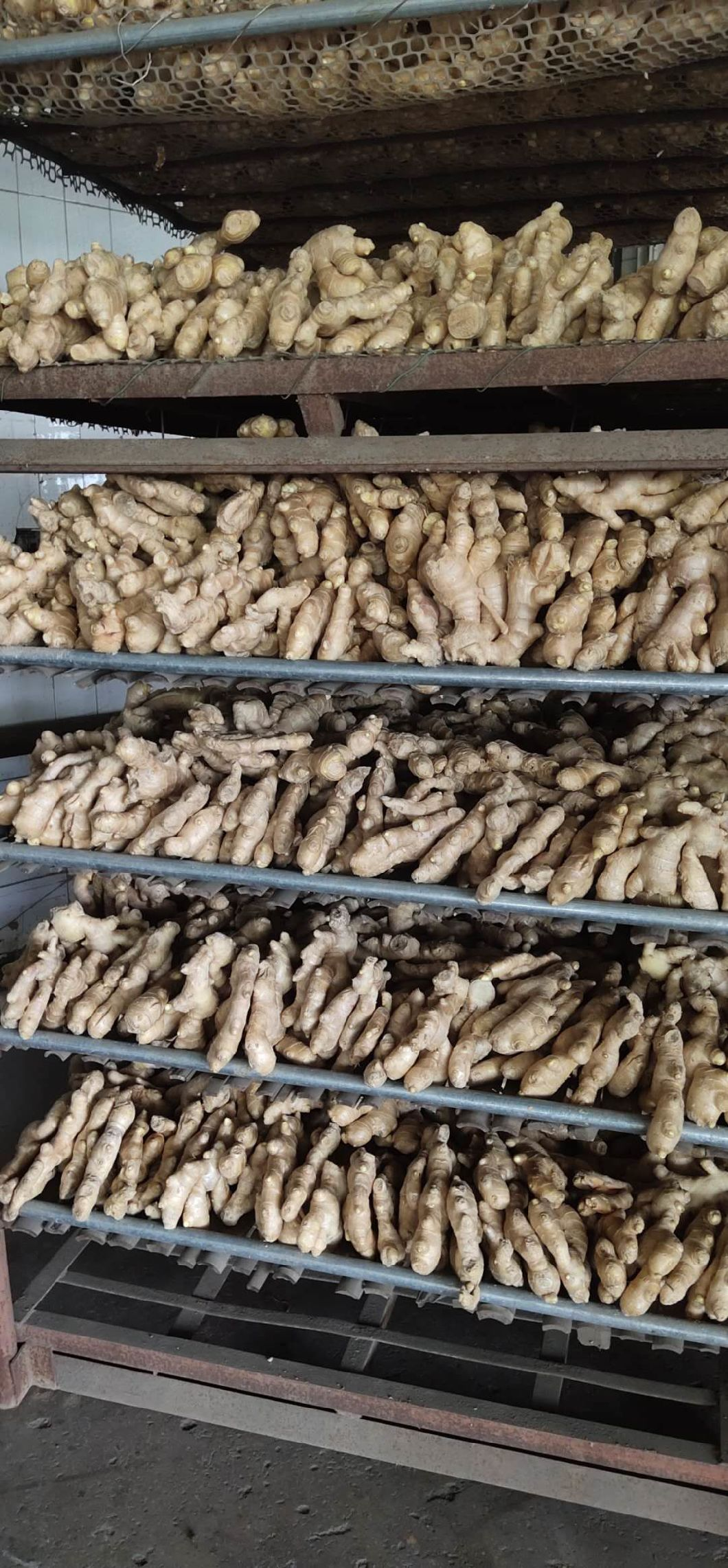 Dried And Half Dried Ginger