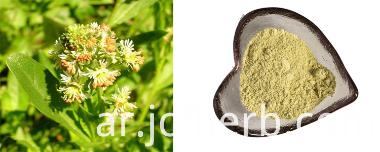 Luteolin Powder 98%