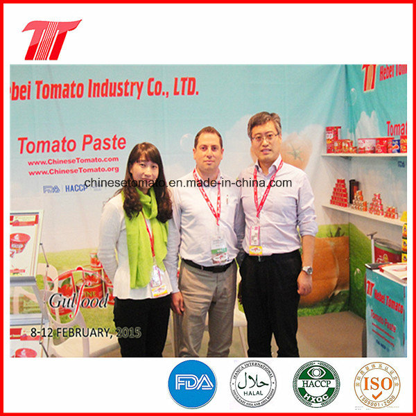 Healthy Canned Tomato Paste of Veve Brand