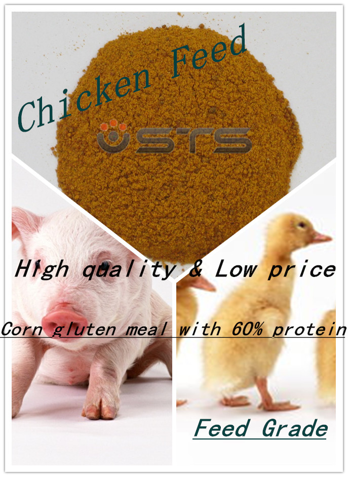 High Quality Corn Gluten Meal for Chicken Feed