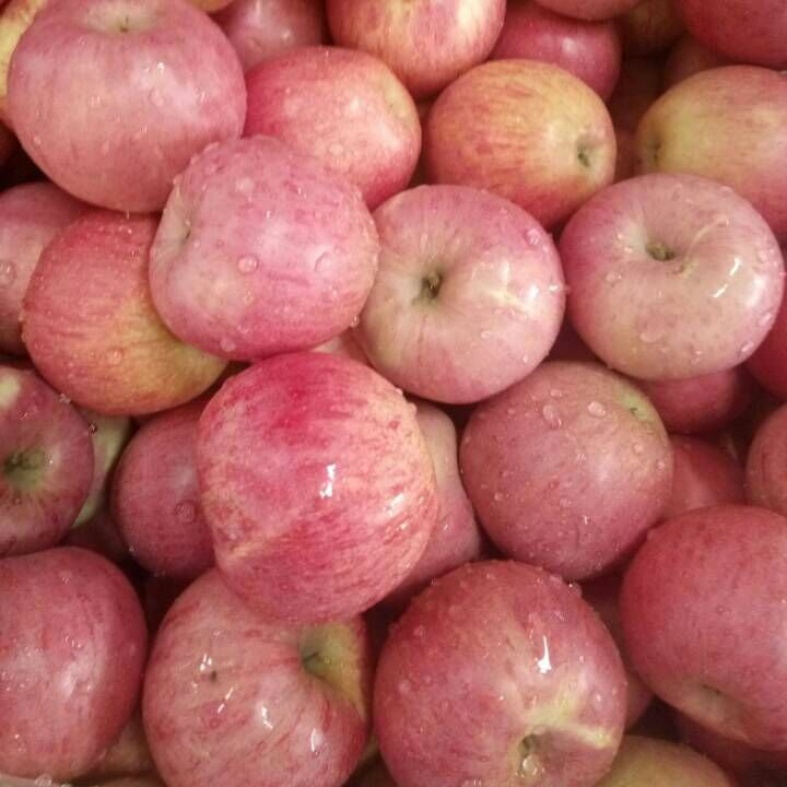 High Quality of Fresh Red Qinguan Apple