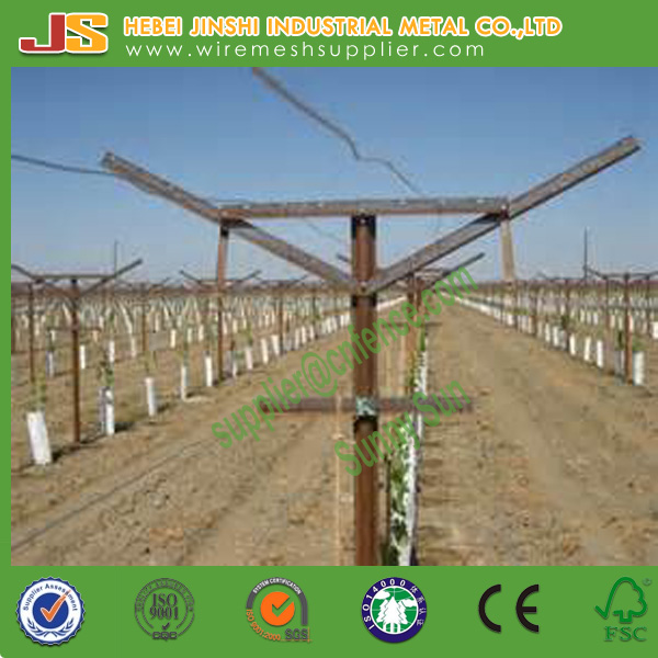 1460mmx1120mm Galvanized Steel Y Shaped Open Gable Vineyard Trellis Post