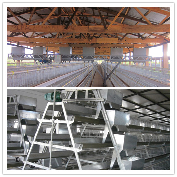 Silver Star Automatic Layer Chicken Cage System