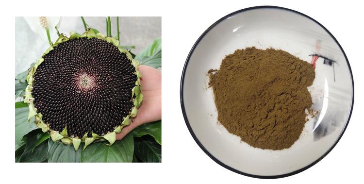 sunflower plate extract powder