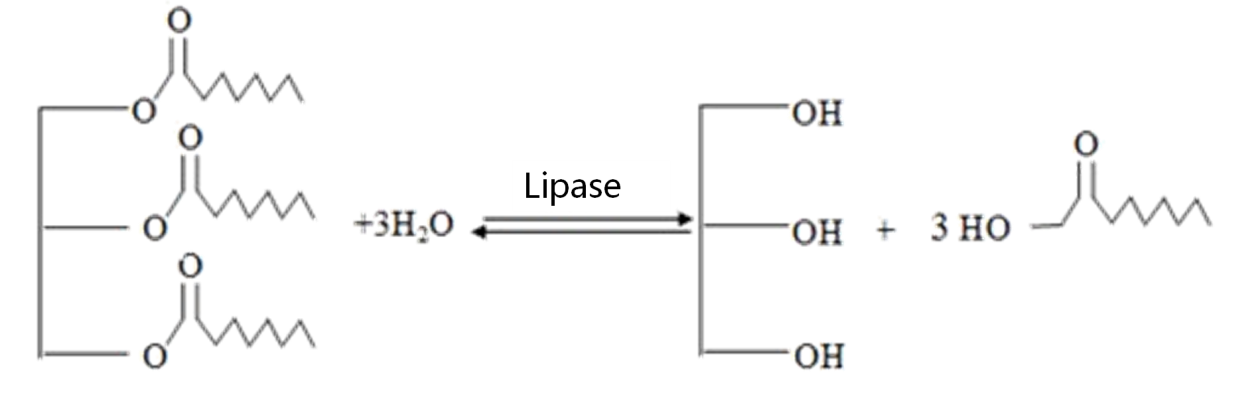 Baking Lipase Enzyme