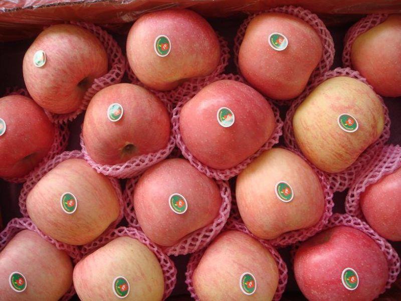 2016 Crop Fresh FUJI Apple