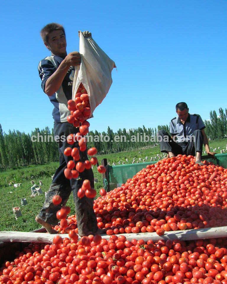 Vego Brand Veve Brand Tmt Brand Tomato Paste of Sour Flavor