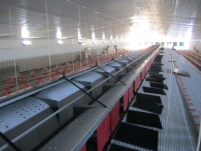 Automatic Nesting Box for Breeder