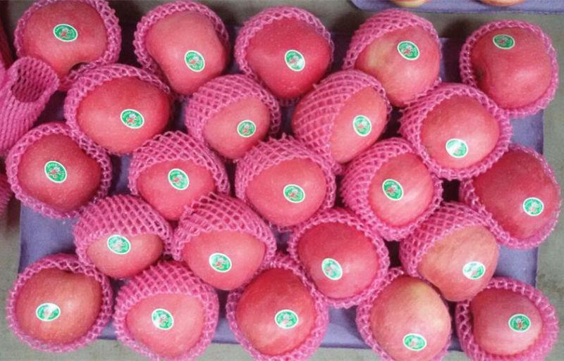 Fresh Red FUJI Apple