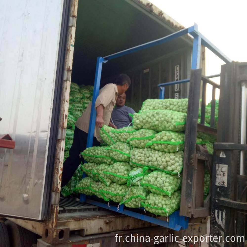 Chinese Best Fresh Natural Garlic Price