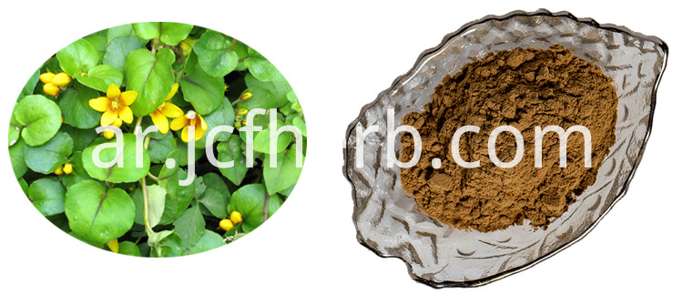desmodium extract powder