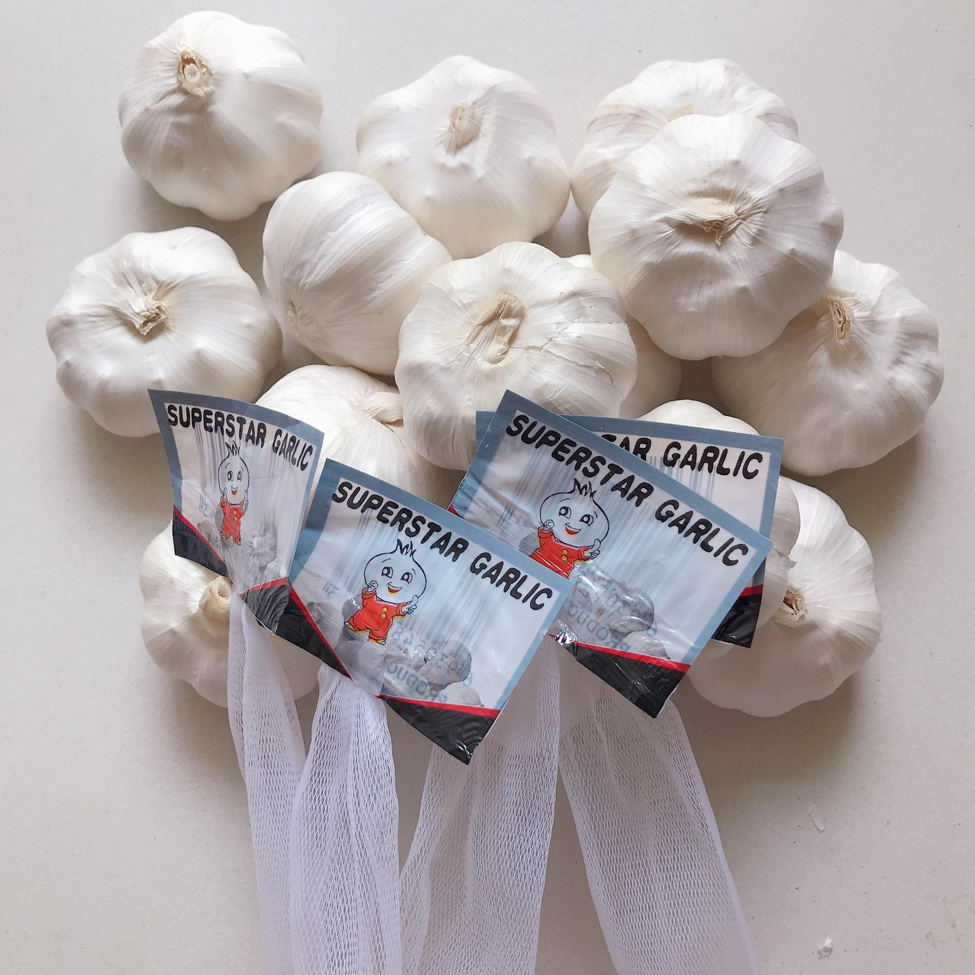 NEW Fresh Jin xiang 5p Garlic
