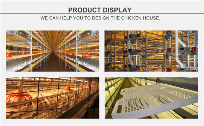 H Frame Broiler Poultry Equipment