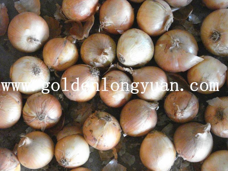 Yellow Onion From China