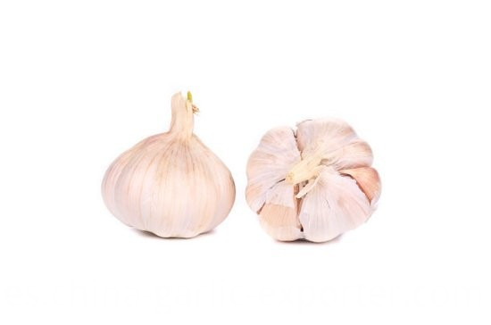 NORMAL WHITE FRESH GARLIC
