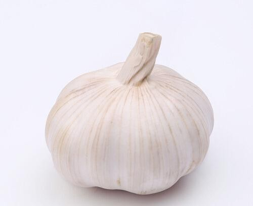 Chinese cold storage Pure White Garlic price