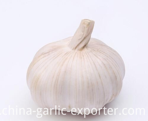Fresh Normal White Garlic Pure White Garlic