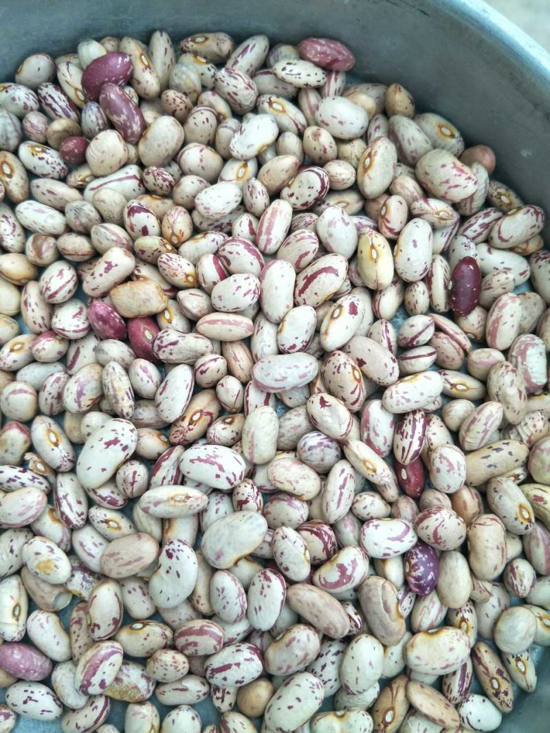 Chinese Pinto Beans, Light Speckled Kidney Bean 2017 New Crop