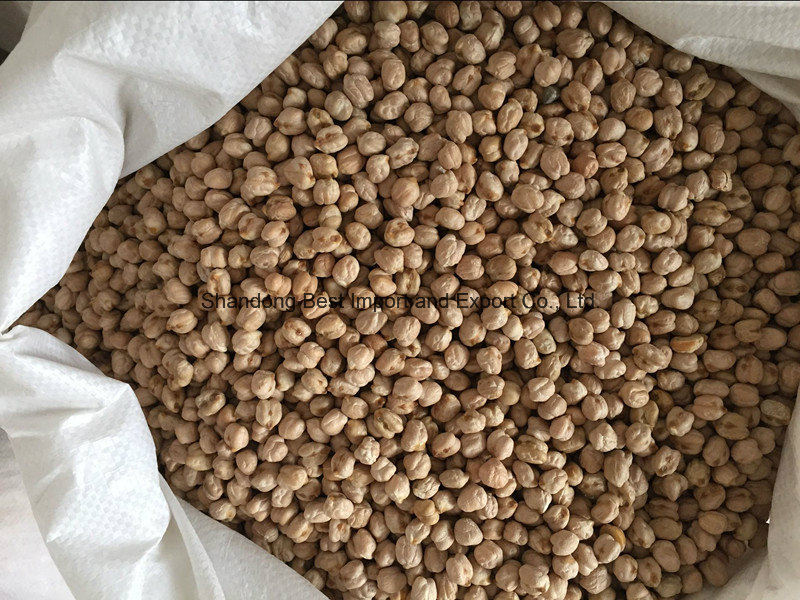 Organic Chickpeas with Different Sizes