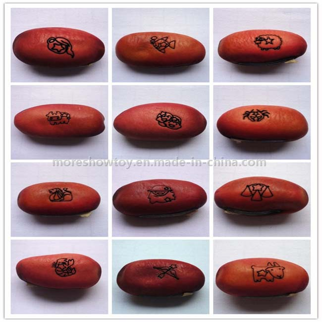 Magic Message Beans Seeds Fun Novelty Gift Grow Your Own Word Message
