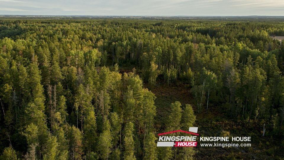 russian pine