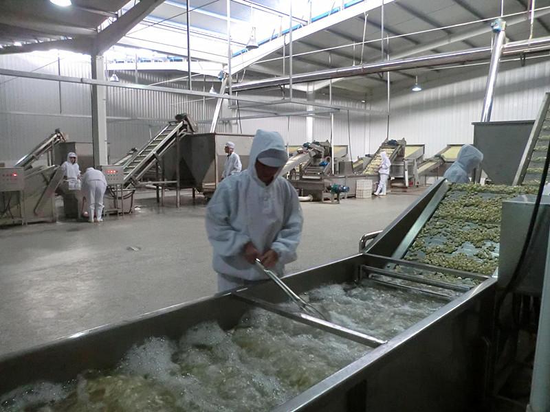 New Crop Dehydrated Garlic Granule Hot Sale