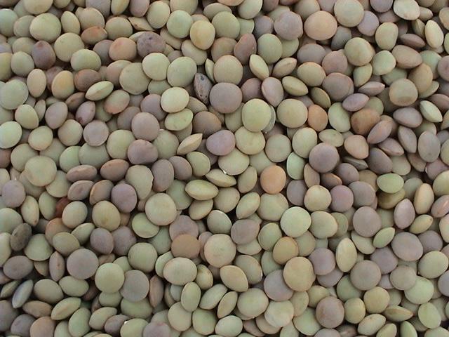 Chinese Lentils/Green Lentils (LT-004)