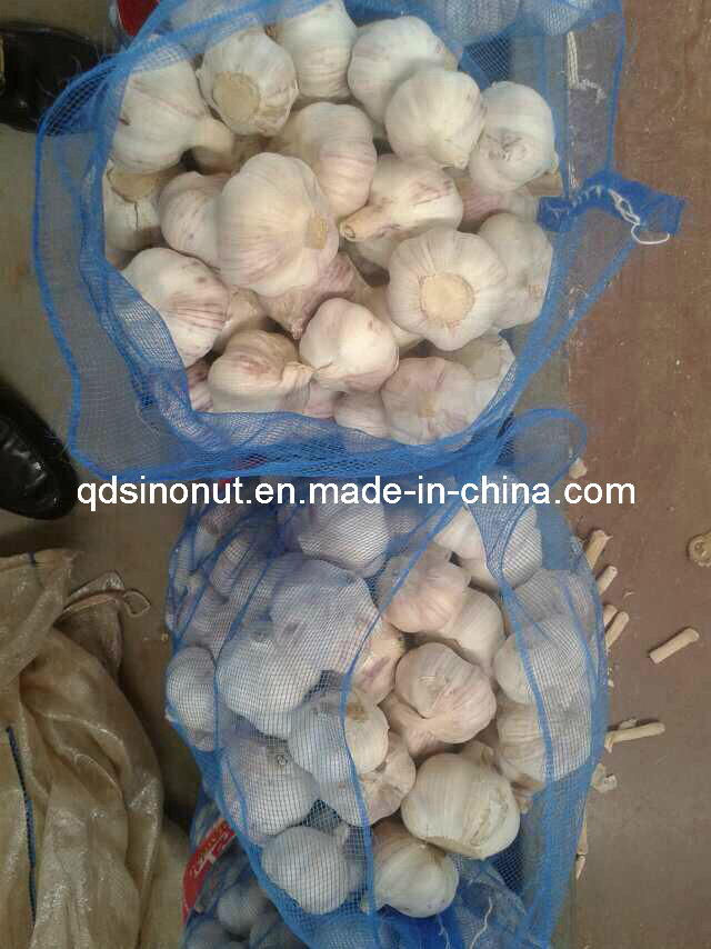 2016 New Crop Fresh Garlic