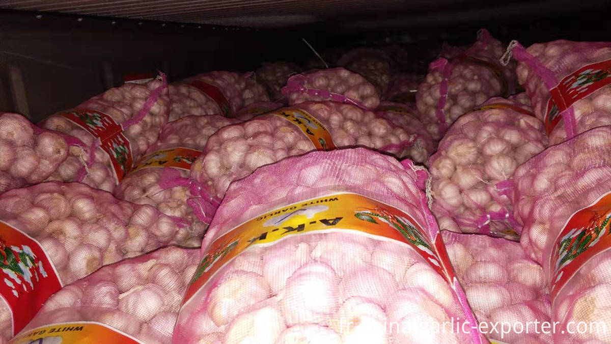 shandong fresh garlic with low price for wholesale