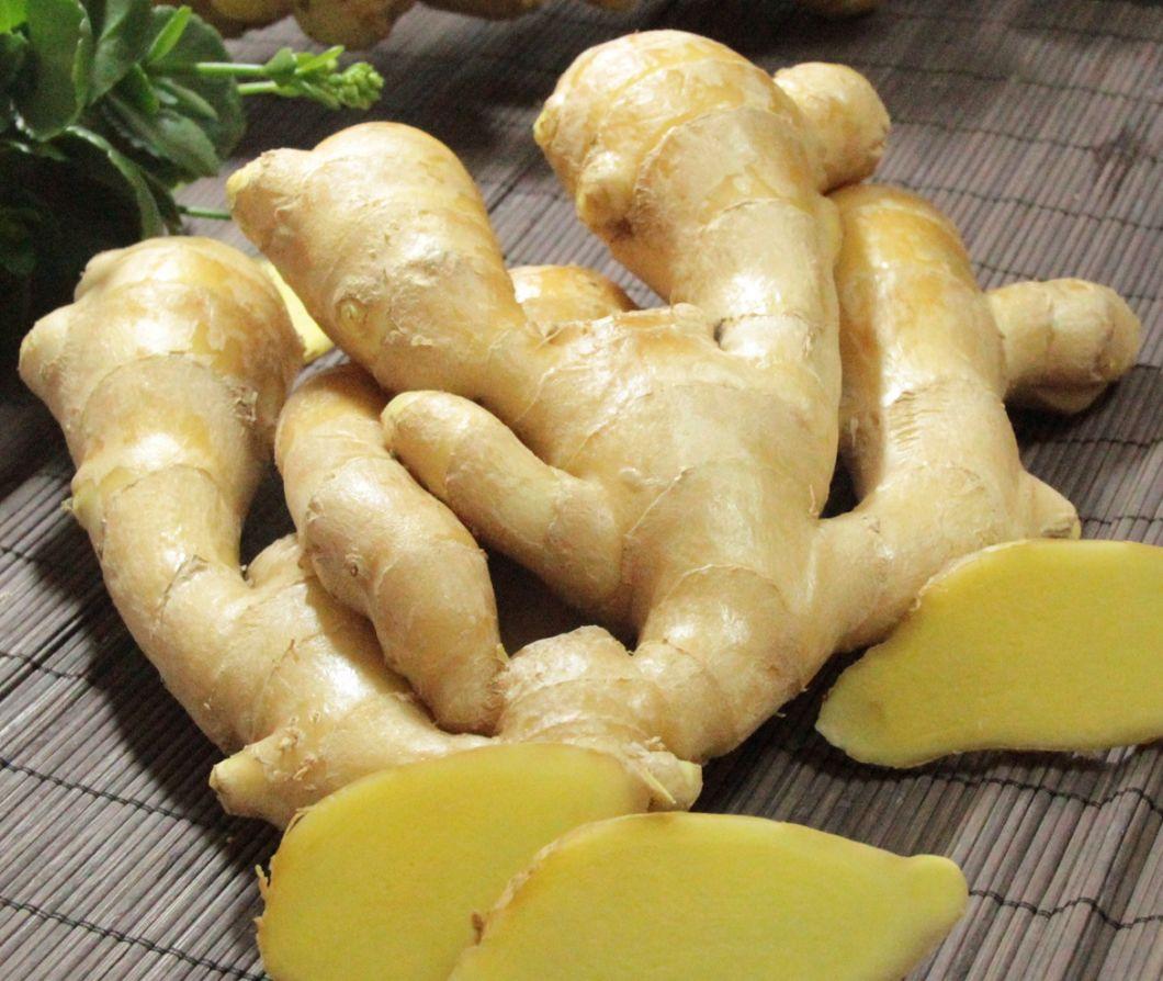 Carton Packing Good Quality Fresh Ginger