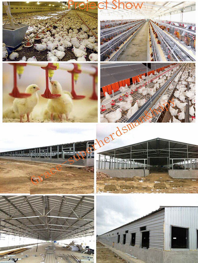 Environmental Control Type Chicken House with Equipment