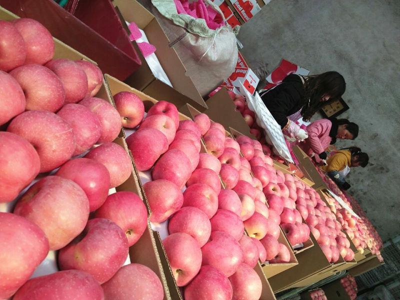 Sweet Fresh Red FUJI Apple From China