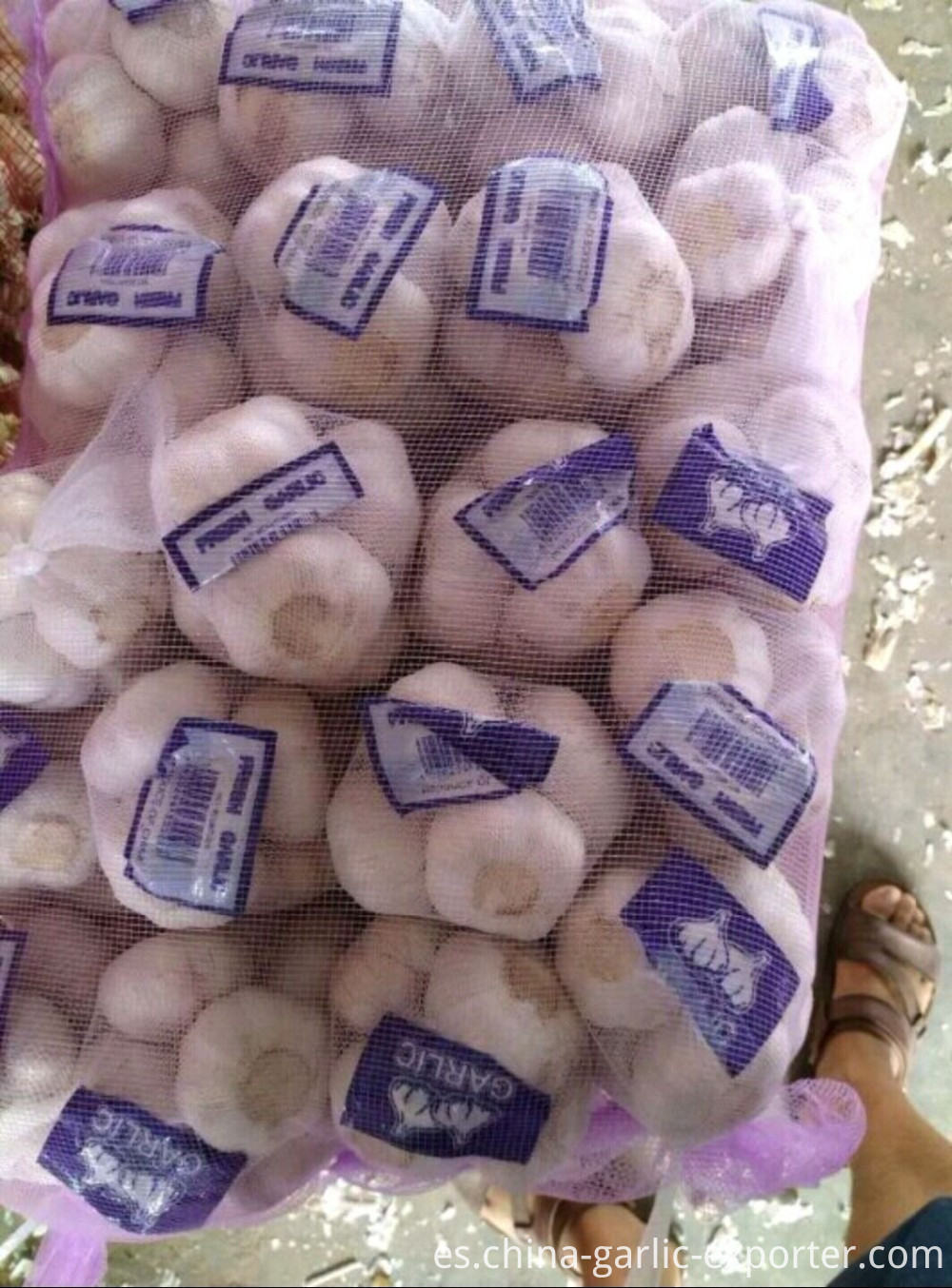 Garlic wholesale Hot sales