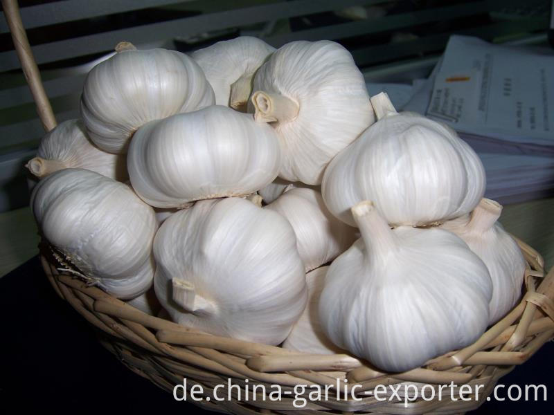 New Crop White Garlic Price in jin xiang