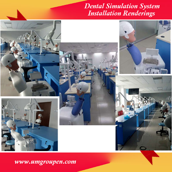 China Top Ten Selling Products Dental Training Head