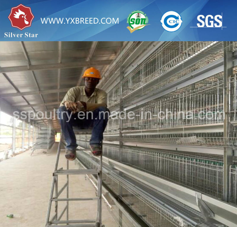 Chicken Cage for Layer Chickens