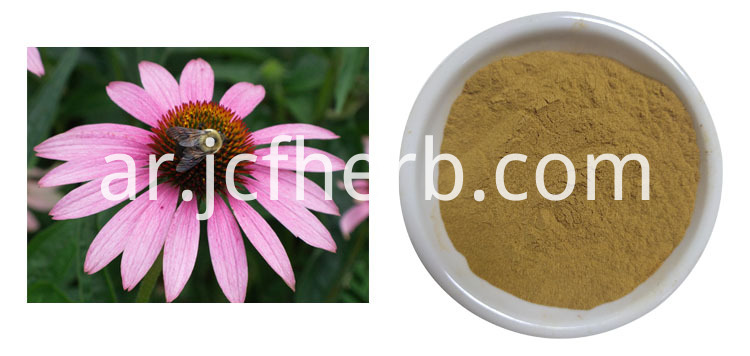 4% cichoric acid powder