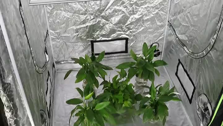 High PPFD Led Umols Grow Light